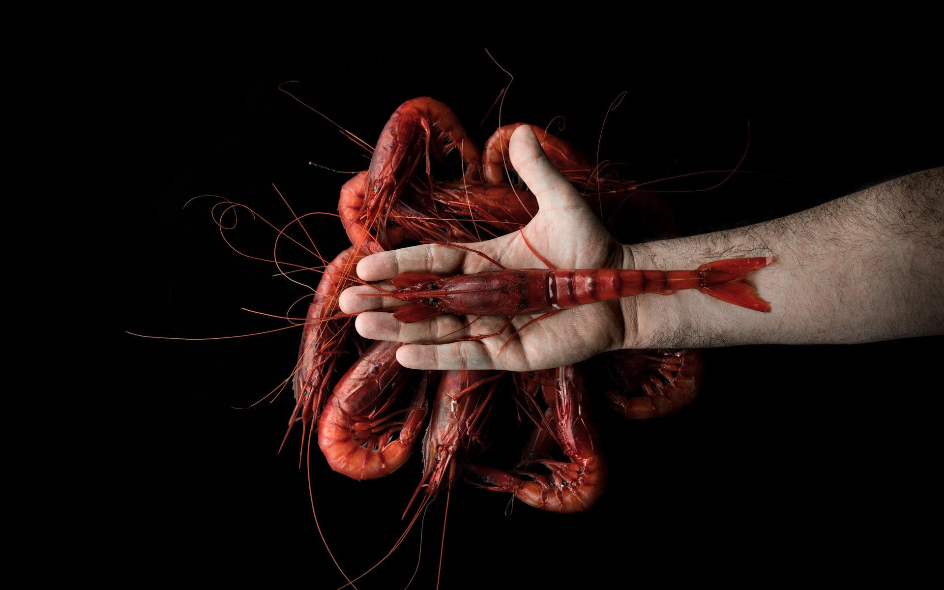 Gamberi rossi di Luca Bizzarri, infoodfamily, foto di Matteo Bizzarri