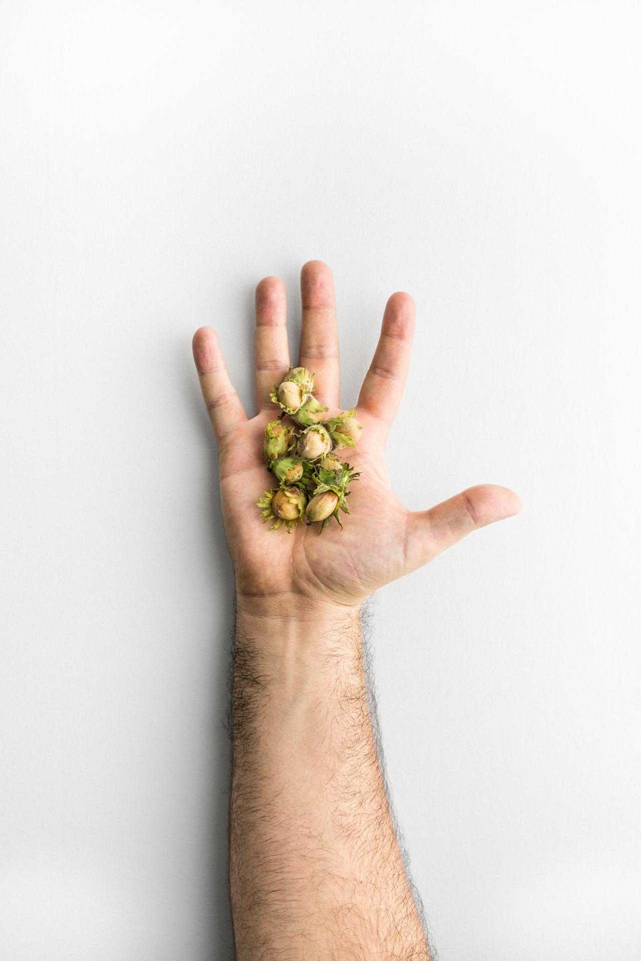 Nocciole verdi di Luca Bizzarri, infoodfamily, foto di Matteo Bizzarri